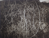 Vines, photogravure